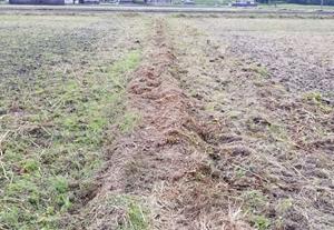 畦の草刈りをしました。畦塗できるかな?