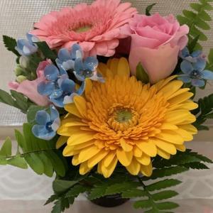🌺今日の花便り
