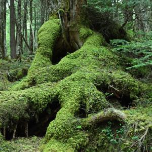 白駒池 苔の森