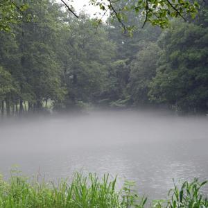 智光山公園の池霧