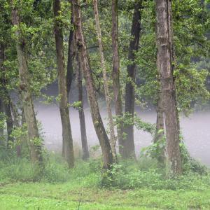 智光山公園の池霧 2