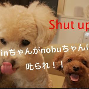 sinちゃんがnobuに怒られました