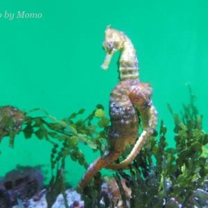沖縄旅行⑥ 沖縄美ら海水族館 3