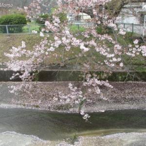 玉原親水公園の自然に癒される♪:岡山県玉野市