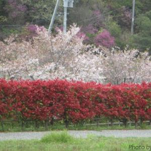 玉原親水公園の自然に癒される♪:岡山県玉野市②