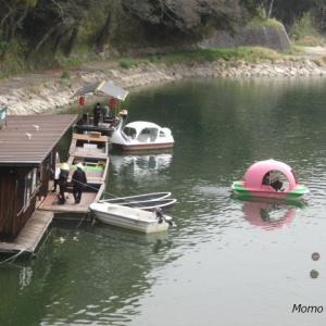 後楽園近くの旭川の【桃ボート・スワンボート・手漕ぎボート】が気持ち良さそう♪
