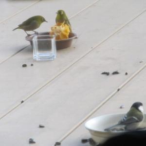 小鳥の楽園!!