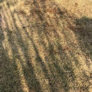 芝生に施肥をして目土も入れました。