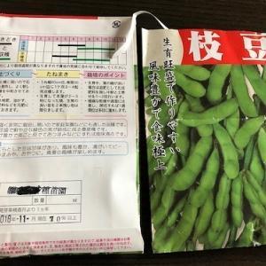 有効期限切れの枝豆を撒いてみた。
