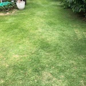 今年早くも2回目の芝刈りをしたよ。