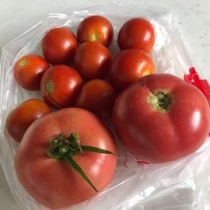 お隣さんから収穫したてのトマトを頂きました。