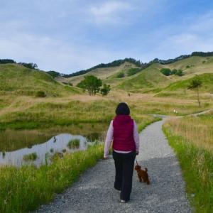 高原 散歩