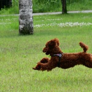 名湯旅 飛行犬