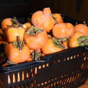 19.11.12 干し柿用の柿と豆