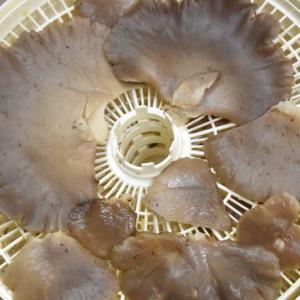 19.11.18 乾燥キノコと ハヤトウリ
