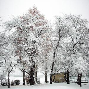 19.12.6 雪景色