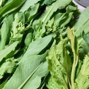 20.4.2畑の野菜