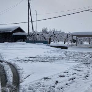 21.1.19 吹雪