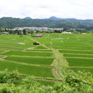 クヌギ平の棚田