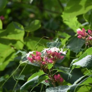 19.8.22  山の花