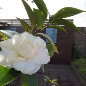 新しい相棒と美しい花・・