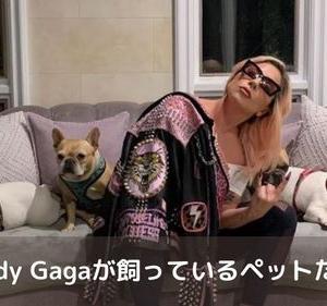 ladygagaが飼っている犬 ドッグウォーカーが銃撃されて犬2匹が連れ去られ懸賞金5300万円