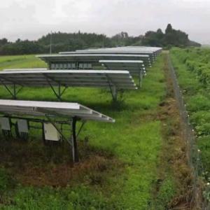 梅雨の合間に撒いた除草剤の効果は?
