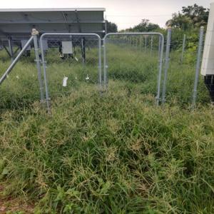 草刈り行ってきました。雑草の勢いが凄い(>_<)