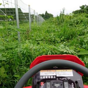 雨の間に草刈作業