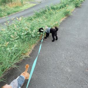 犬との散歩