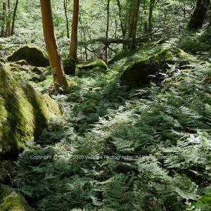 静寂の中の荒波 ~赤井谷・釈迦ヶ岳~