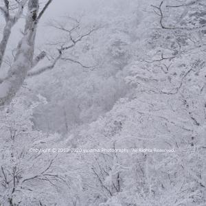 霧氷 ~山上ヶ岳(大峯山)~