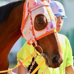 2019.11.4(月) 浦和JBC開催日の工藤厩舎のお馬さん