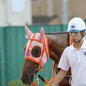 2019.7.24(水) 浦和 工藤厩舎のお馬さんたち その1
