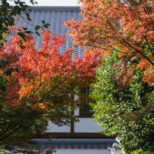 高台寺の紅葉は見頃です。