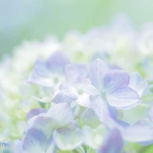 花の色が醸し出す世界