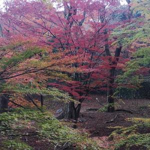 養老の滝に紅葉狩り♪