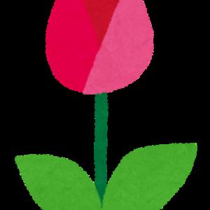 花言葉は誠実な愛