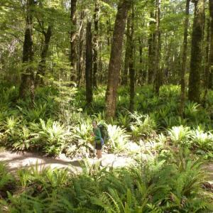 Kepler Track in Fiordland National Park Day3 〜 Iris Burn Hut to Moturau Hut 〜