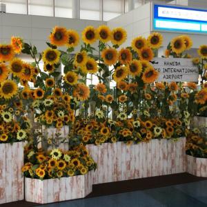 8月韓国旅行in羽田空港国際線