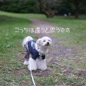 秋のお花を見に行こう③☆昭和記念公園
