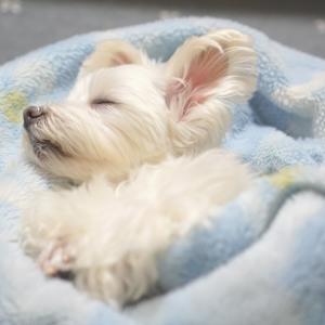 天使の寝顔は幸せの顔♡