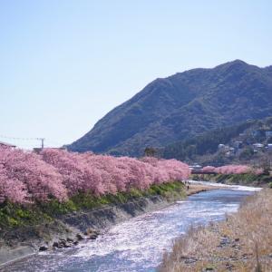 春の伊豆半島へ ☆ ピンクの世界♡