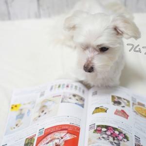 空ちゃん、雑誌に載る。