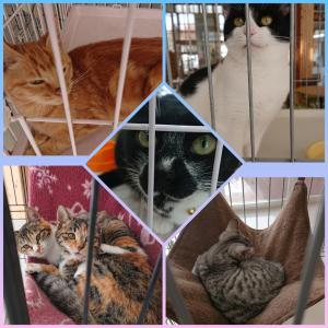 動物愛護センターと迷子ネコ