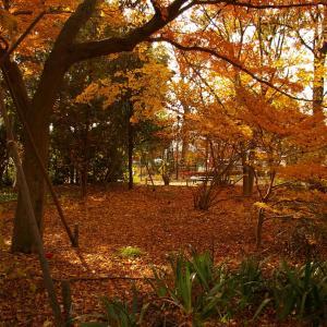 晩秋の井の頭公園とジブリ美術館