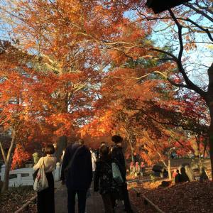 今年最後の紅葉狩り 九品仏の紅葉