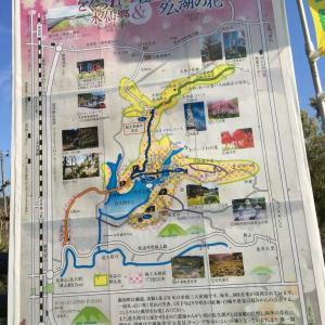 房総半島無料日帰りバス旅行 をぐづれ水仙郷