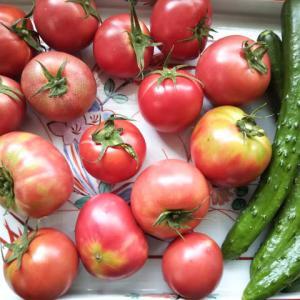 ちょこっと農園の野菜を買いにいく、夕方はsuzuもいました♪