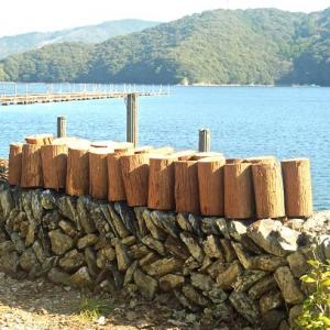 切り出した木材を薪サイズに切断